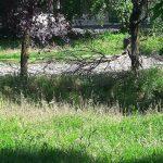 foto milonga cura del verde bastioni Verona